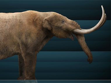 The Extinct Mastodon