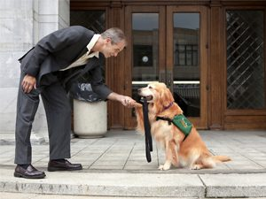 Meet a Very Special Courthouse Dog