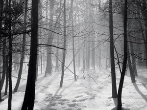 snow woods trees