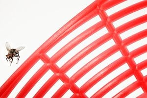 Red flyswatter and fly