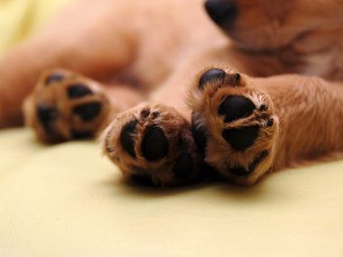 closeup of dog paws