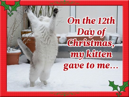 On The Twelfth Day of Christmas, My Kitten Gave to Me...