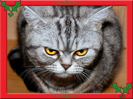 shady-glances-cat