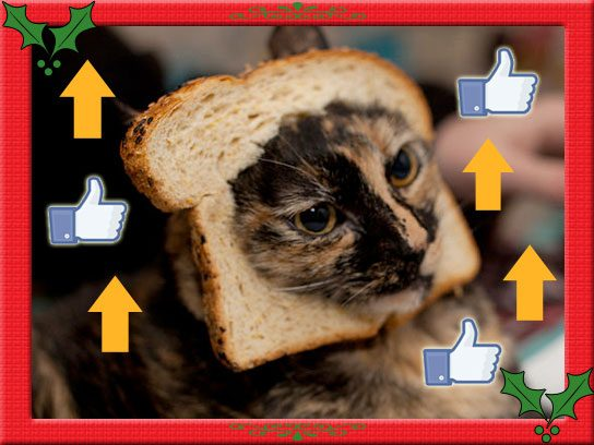 viral-bread-cat