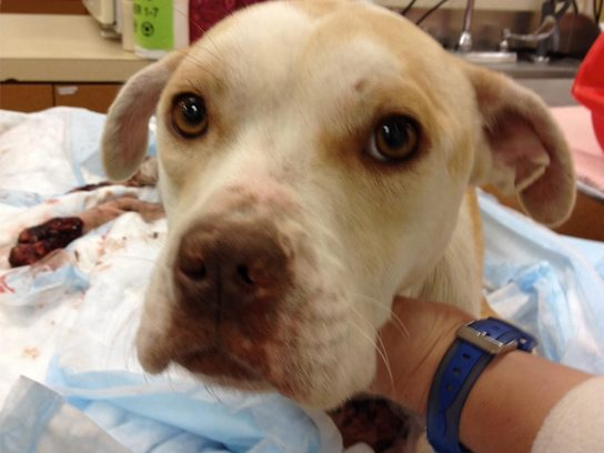 Everyday Heroes: Social Media Saves a Battered Puppy