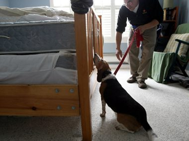 Dog sniffing for bed bugs
