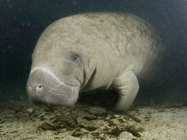 Manatee clean weeds