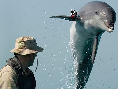 Dolphins helping detect water mines
