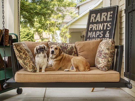 dogs sitting on swing