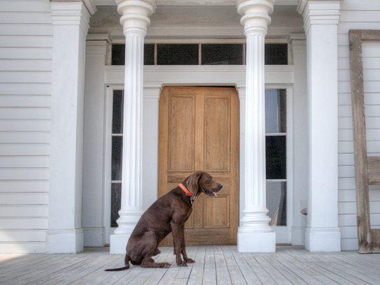 dog on southern porch