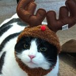 16 Purrfect Pet-Themed Christmas Cards Guaranteed To Put A Smile On Your Face
