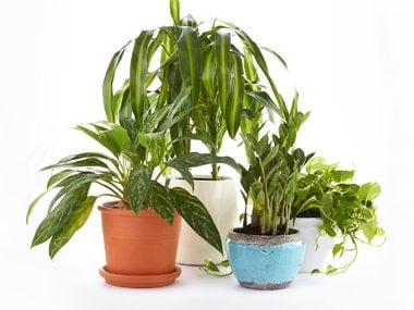 12 Healthy Houseplant Hacks For Those Who Lack a Green Thumb