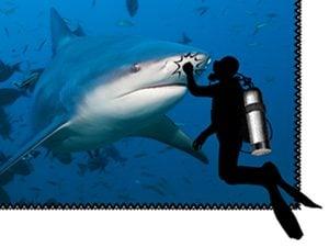 shark and scuba diver