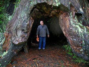 david milarch inside tree