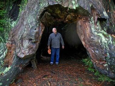Can David Milarch Save Endangered Trees Through Cloning?
