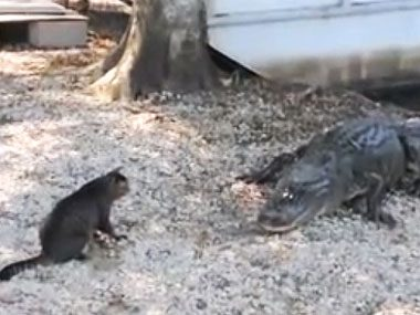 Cat protects boys from gators