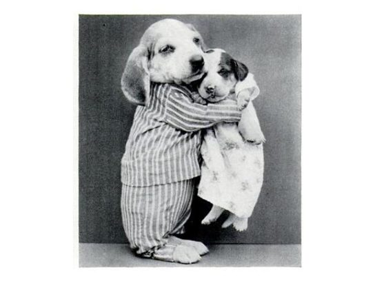 Two dogs hugging