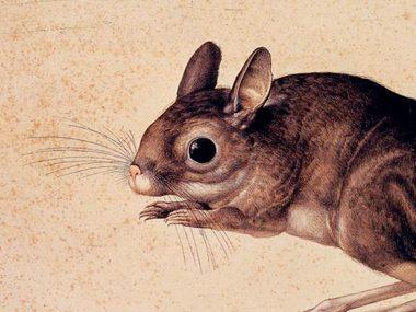 gerbil-funny-limerick-poems-for-kids