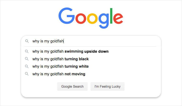 google search auto fill suggestions