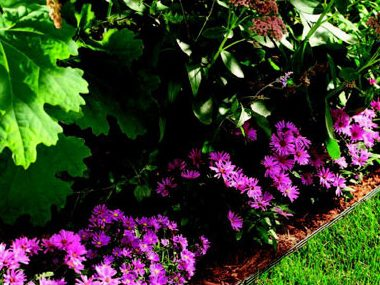 Planning your perennials and annuals.