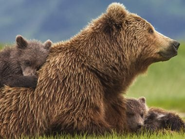 9 Brown Bear Facts That Are Pretty Wild | Reader's Digest - photo#8