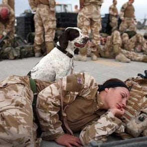 soldier sleeping with dog