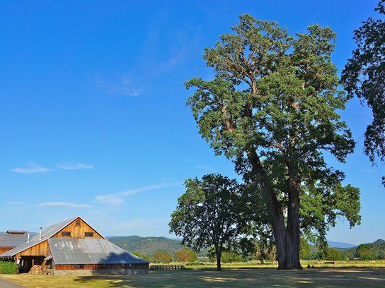 Vallley Oak, California