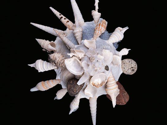 Carrier Snails