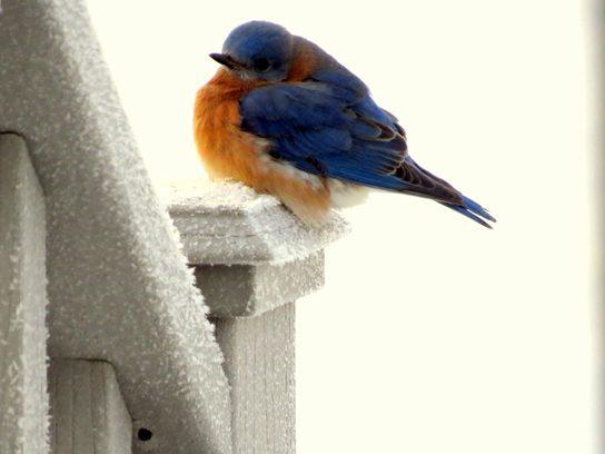 The perfect perch