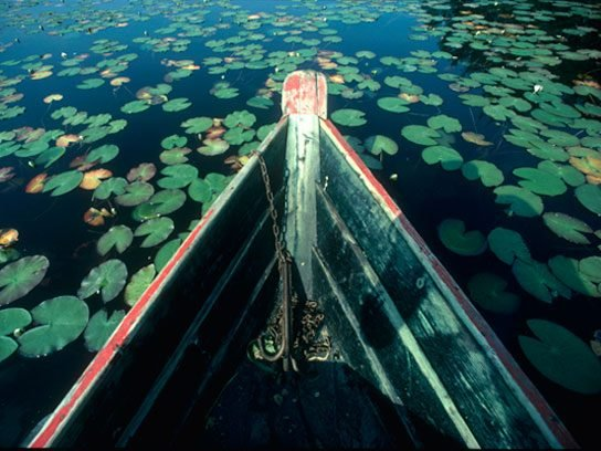 <i>Rowboat and Water Lilies in Rural Sweden</i>, Bo Zaunders