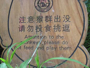 Attention to the monkeys, please do not feed and play them.