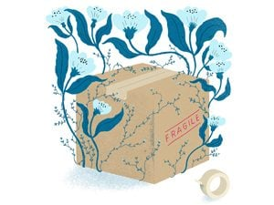 packing box illustration
