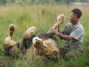 man playing with lion