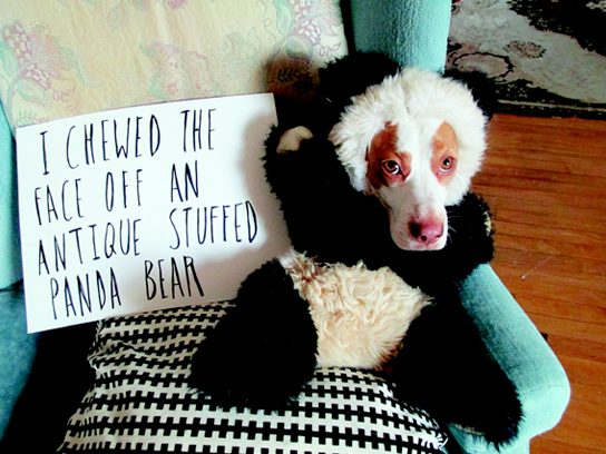 I chewed the face off an antique stuffed panda bear.