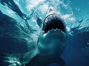 Shark! Swimmer Fights Terror in Sudden Attack