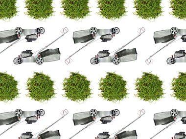 Fresh-cut grass