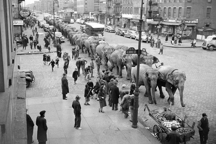 Circus Elephants On Parade 1948, New York, USA