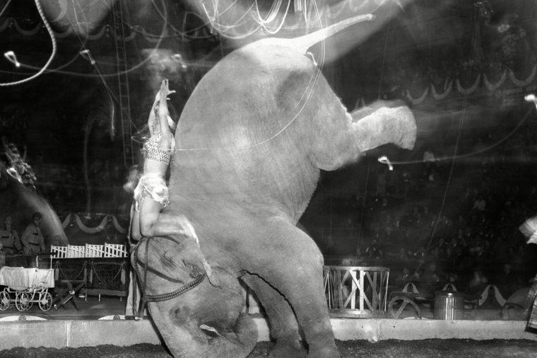 Ringling Bros Circus Elephants Photo Gallery, New York, USA