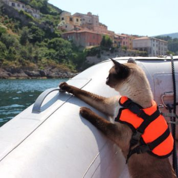Meet Bailey, the Cat Who Loves to Sail