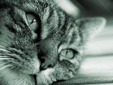 Cat Cancer Signs 11 To Look Out For Reader S Digest