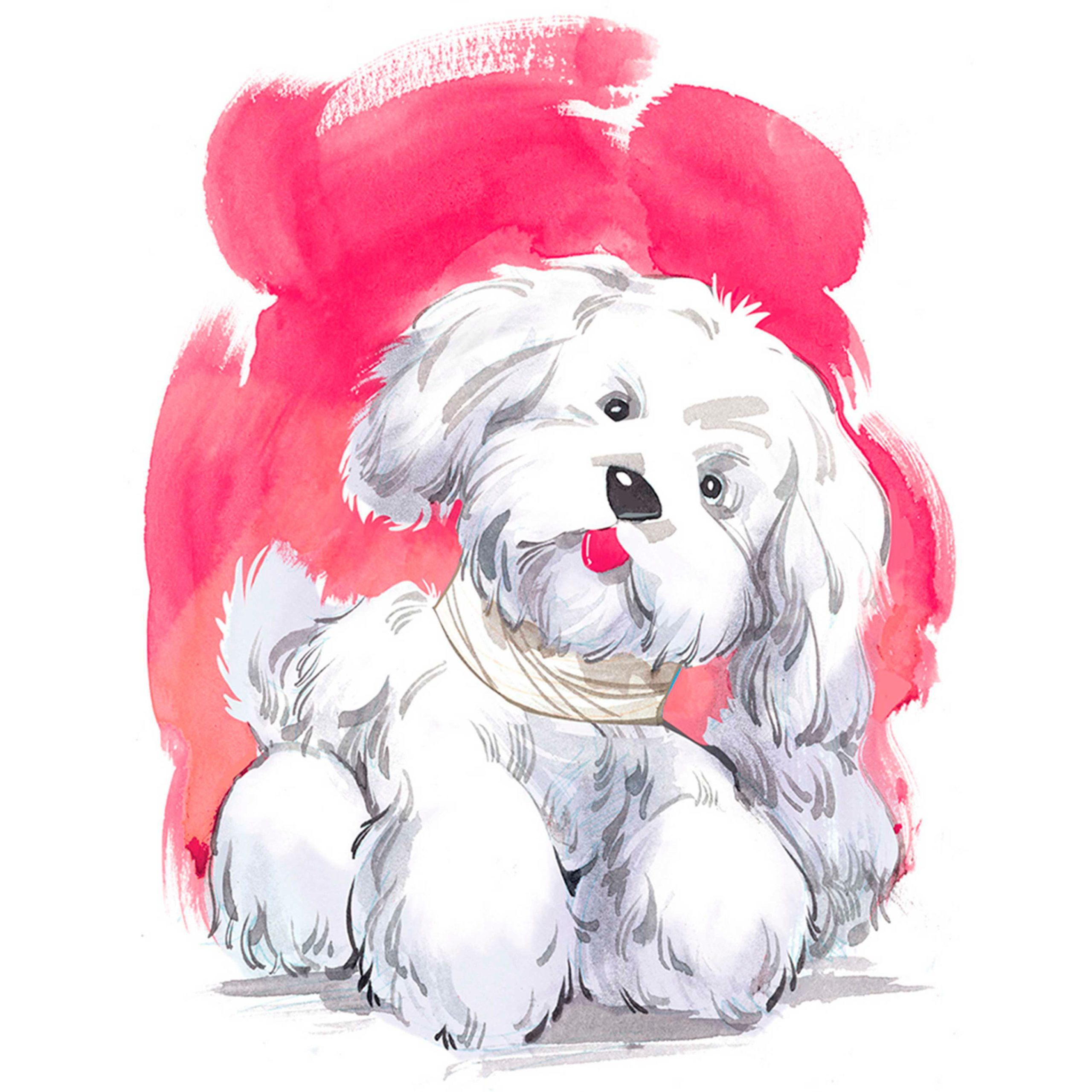 illustration of a white dog