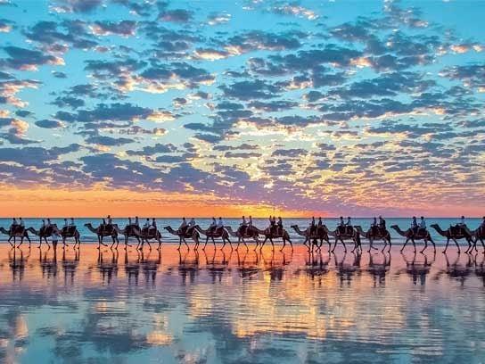 stunning photographs camel