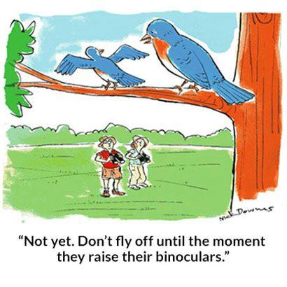 Bird Bait