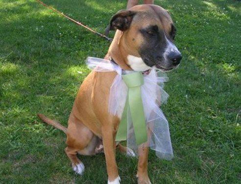 Flower Dog Attendant