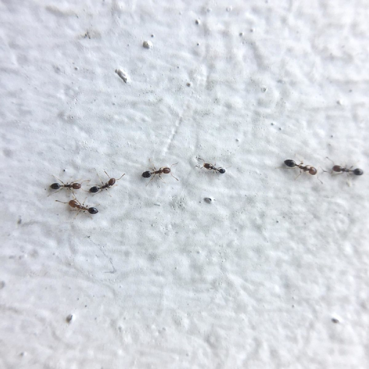Ant Control Tips to Get Rid of Ants (Without an Exterminator ...