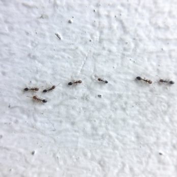 7 Ways to Get Rid of Ants (Without Calling the Exterminator)