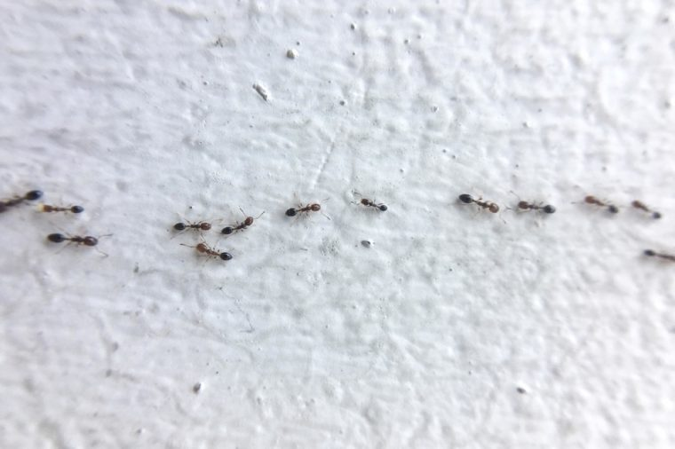 Close up ants on the wall