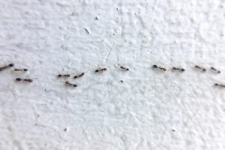DIY ant trap