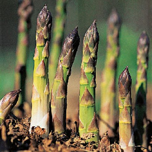 Store asparagus like roses.