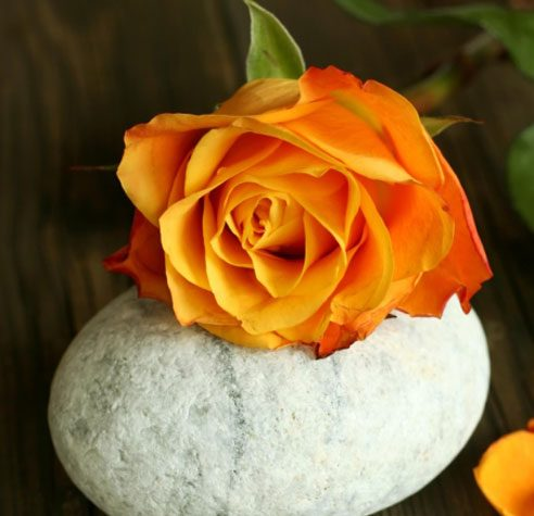 6 rose color meanings for The meaning of orange roses